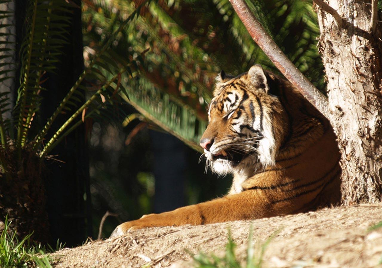 sdz-tiger-trails-6.jpg