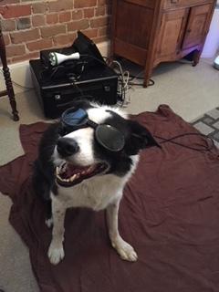 laser dog.JPG