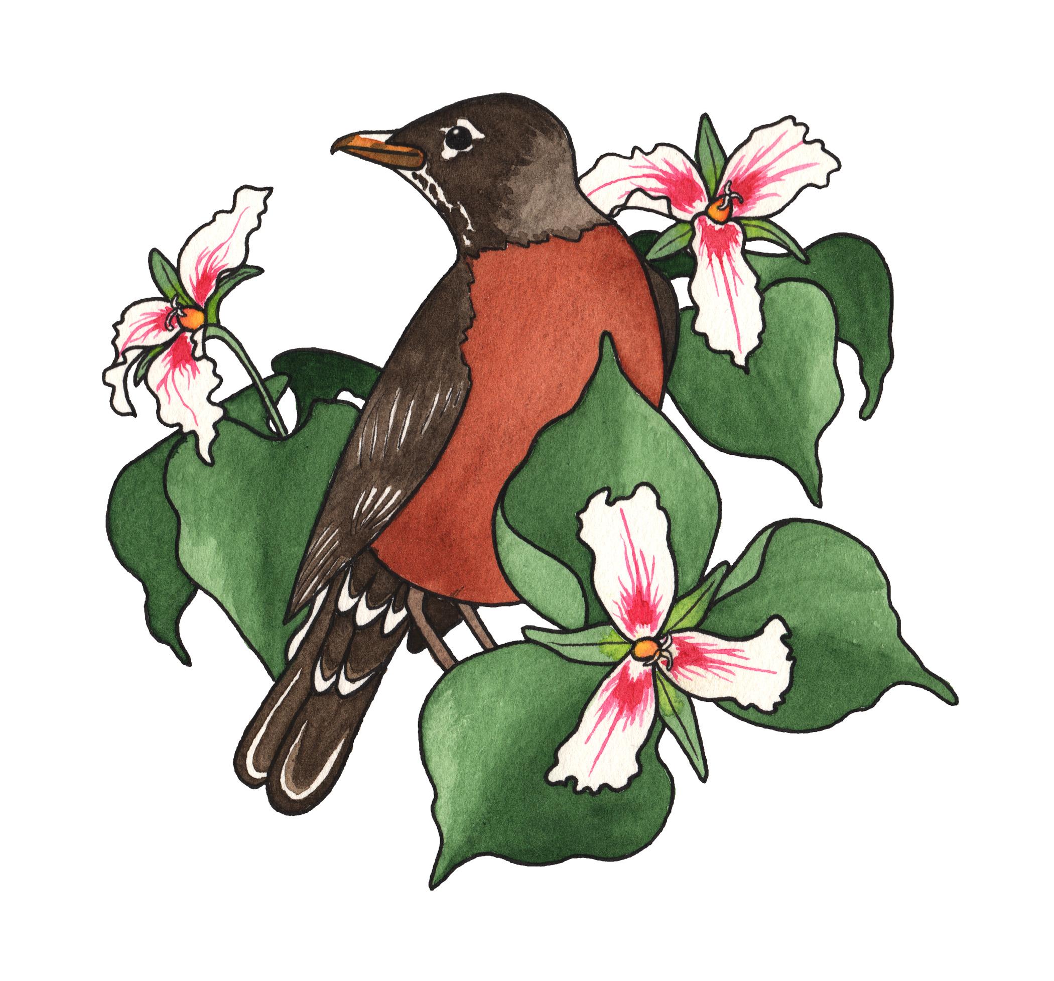 Robin & Trillium, 2017   Pen & Watercolor