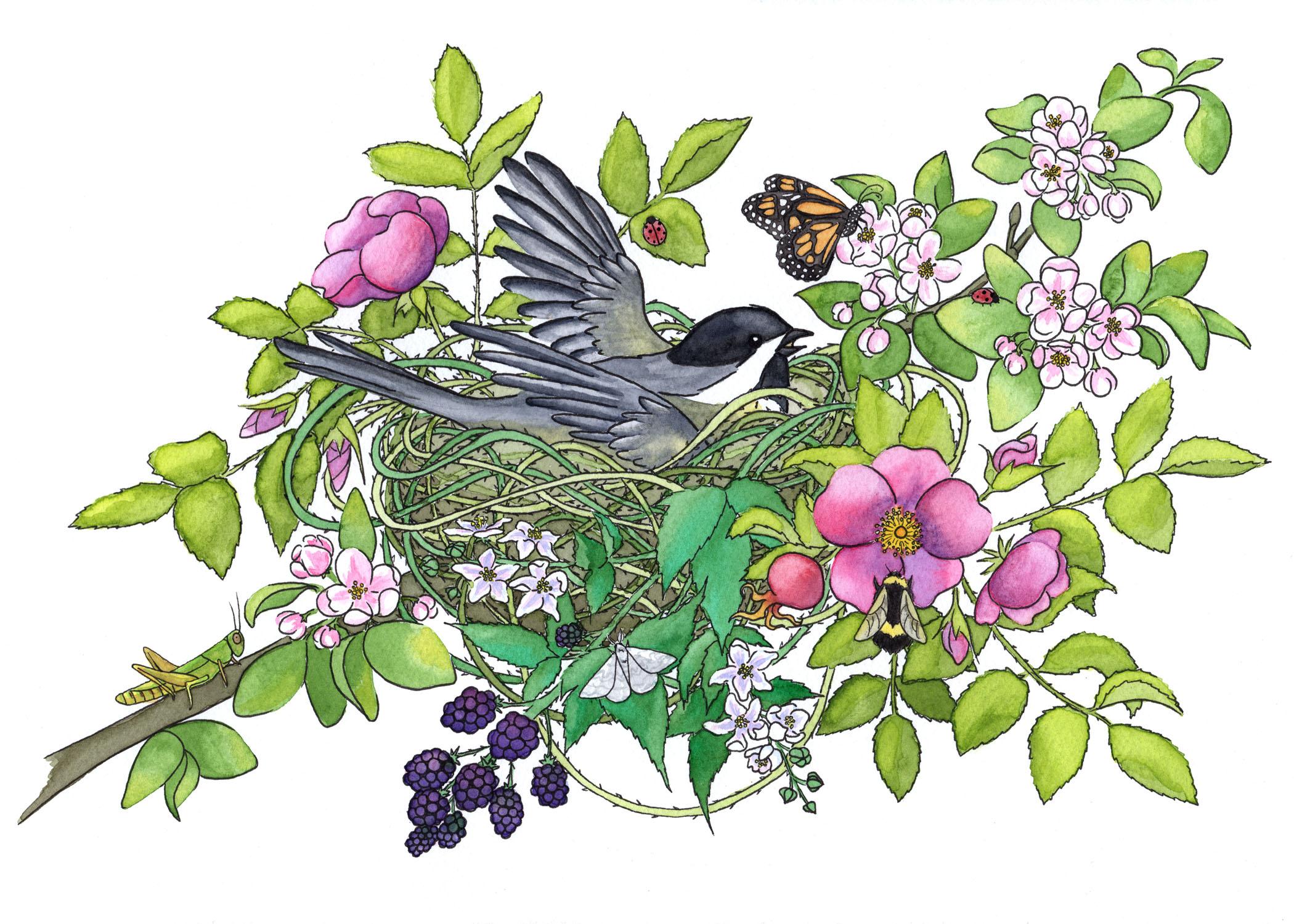 Spring Nest, 2017   Pen & Watercolor