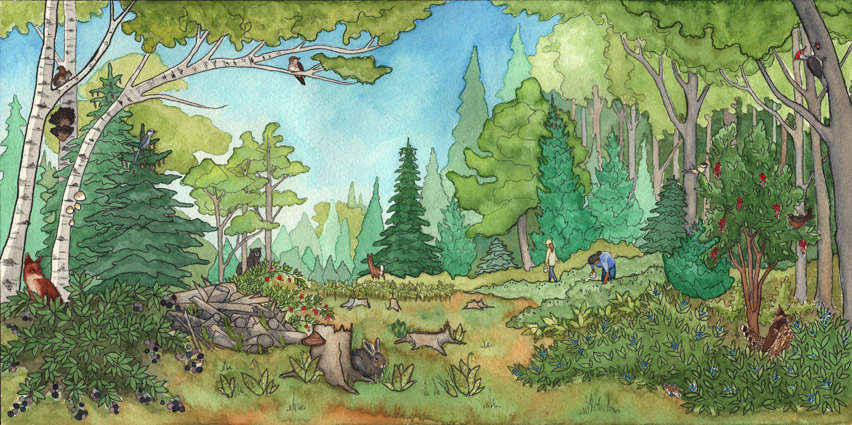 Michigan Wilderness - Forests, 2017   Pen & Watercolor