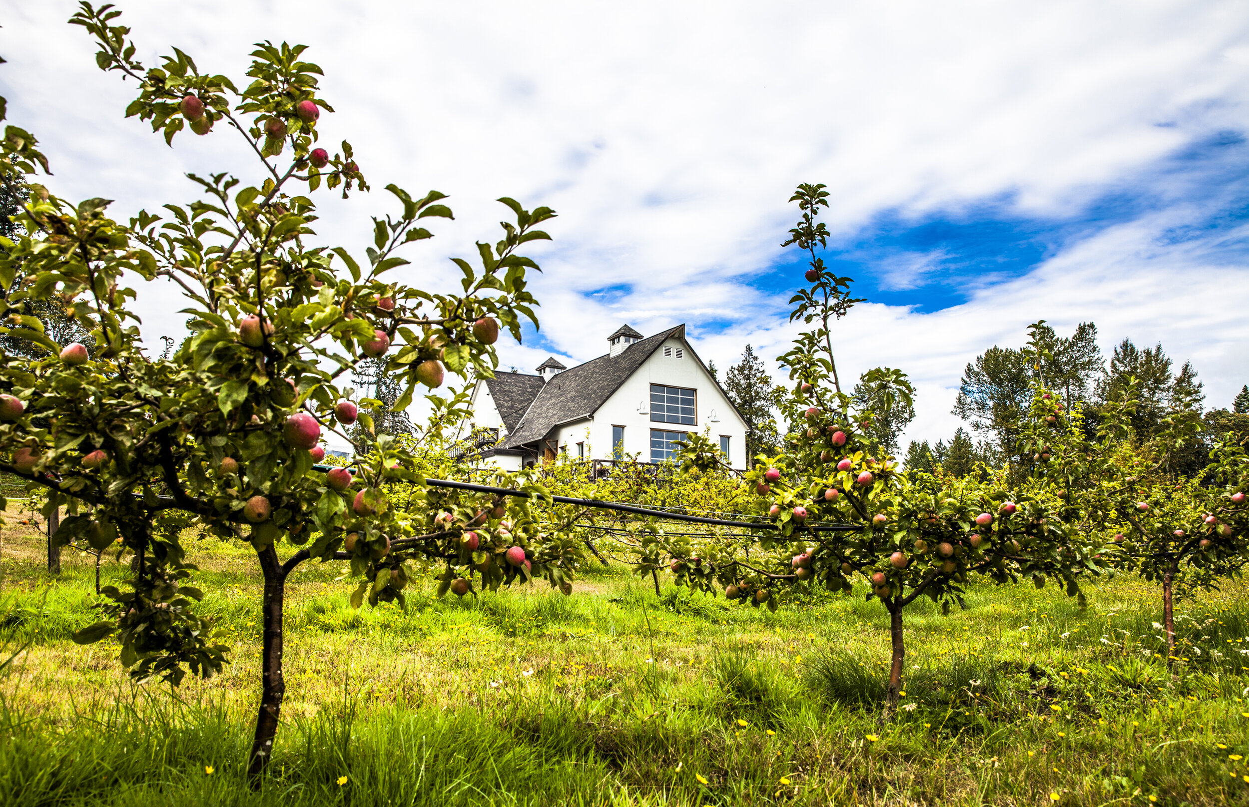 Drop into Sea Cider Farm & Ciderhouse for a refreshing pint or a picnic in the orchard.  Tourism Victoria