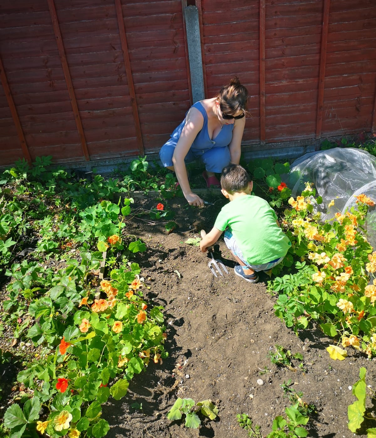 Gardening with my boy: in shot - strawberries, nasturtiums, potato plants, broccoli and the odd weed!