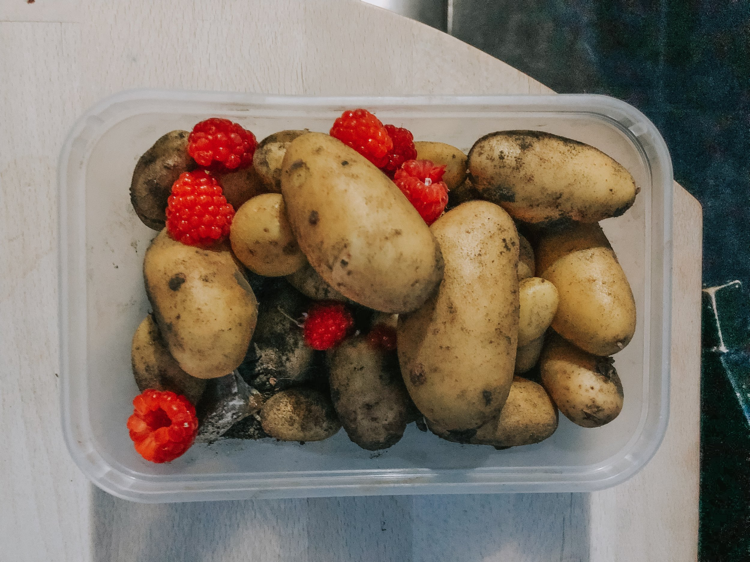 a potato crop from one potato dig today (and a few raspberries)