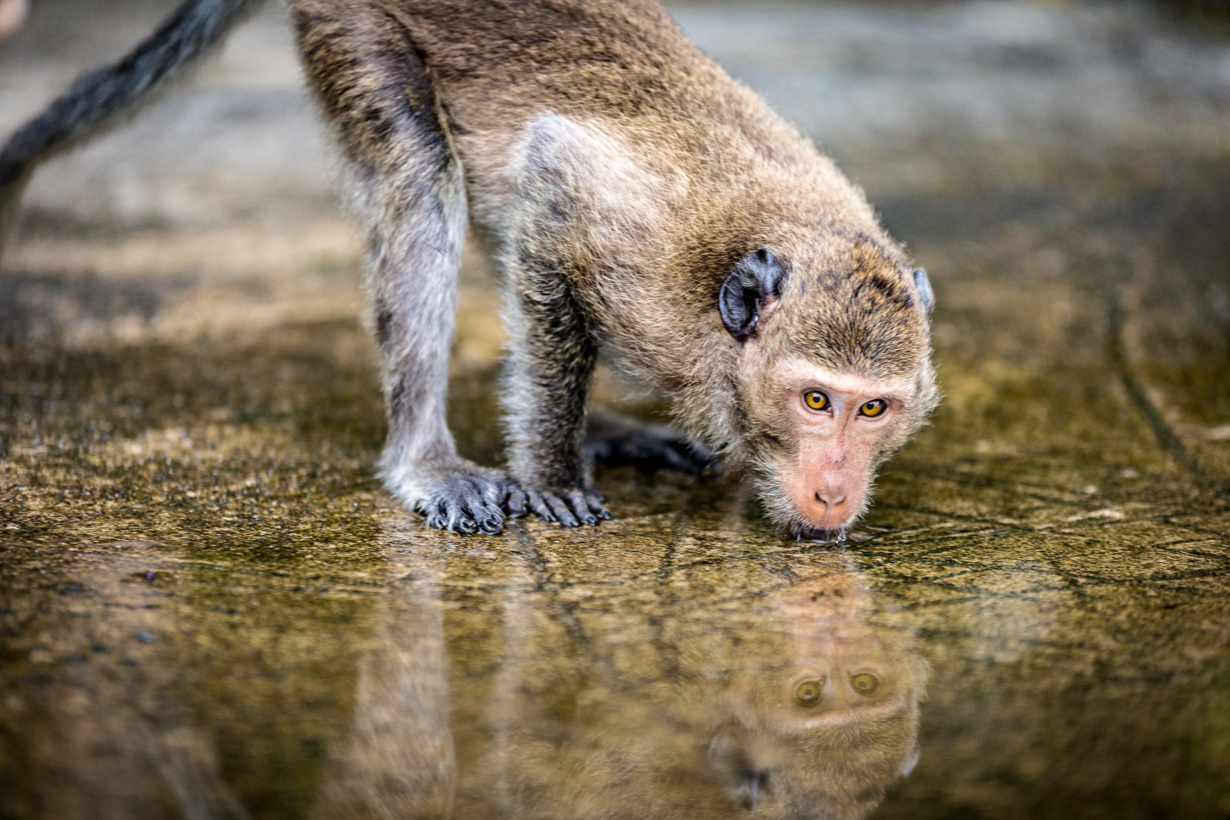 Rupert Turkington Travel Photography - Koh Chang Monkey