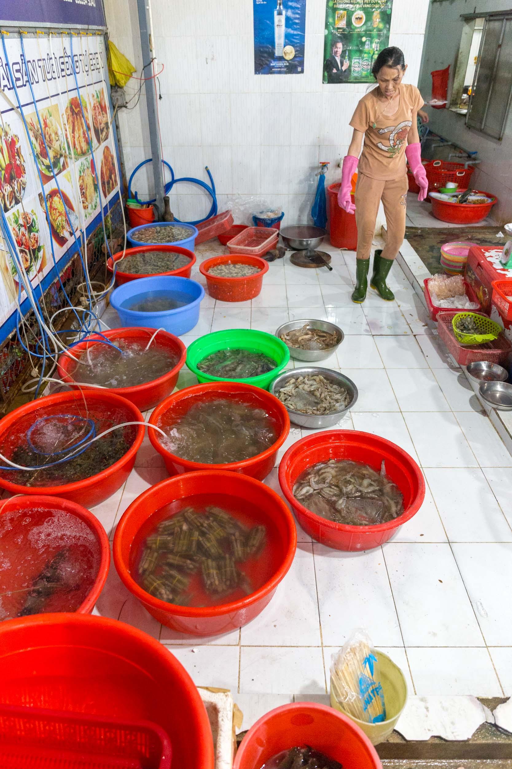 Fresh fish buckets at Hải sản Bà Rô, Seafood Restaurant Da Nang, Vietnam.