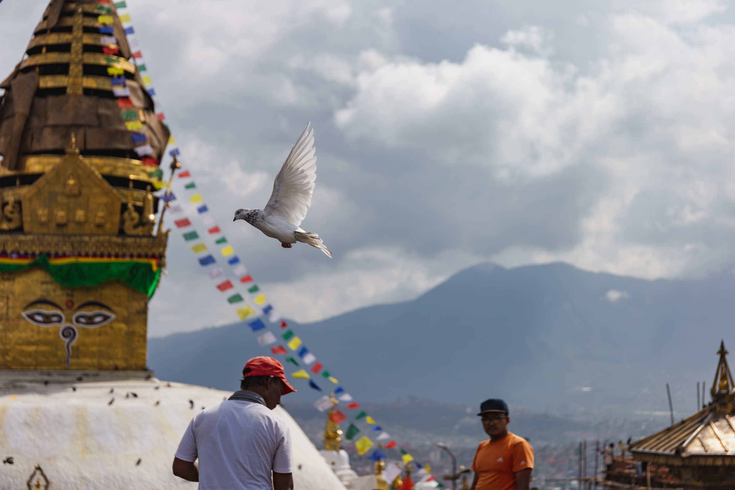 Bird flies by Swayambhunath temple.
