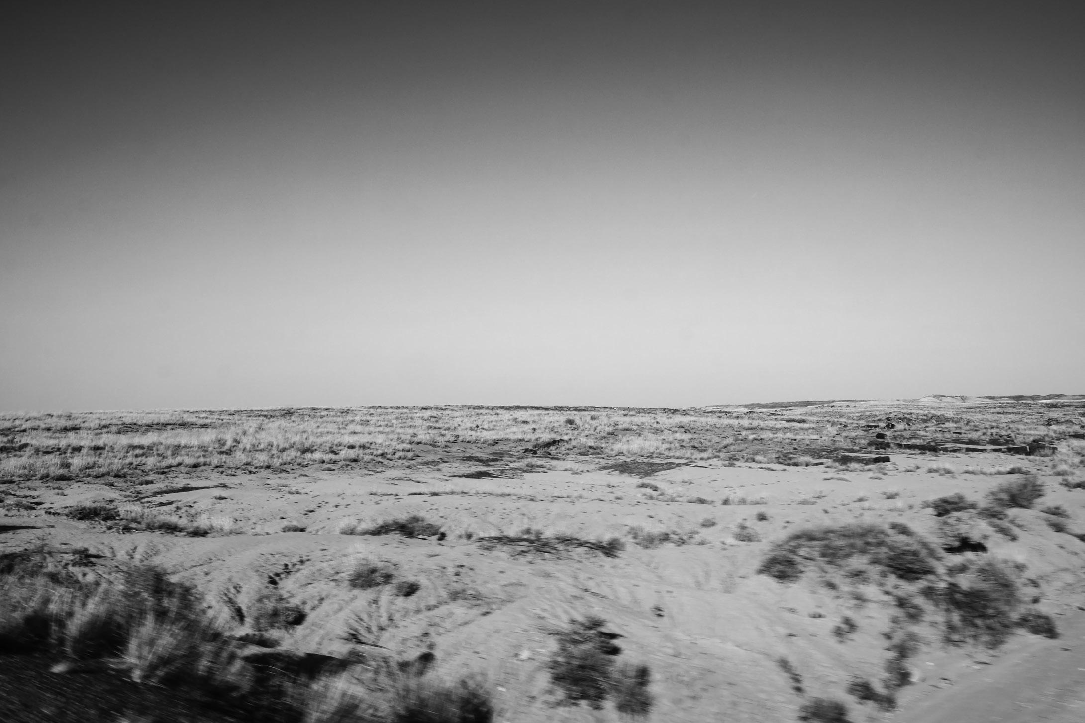 Dreaming Arizona , 2013