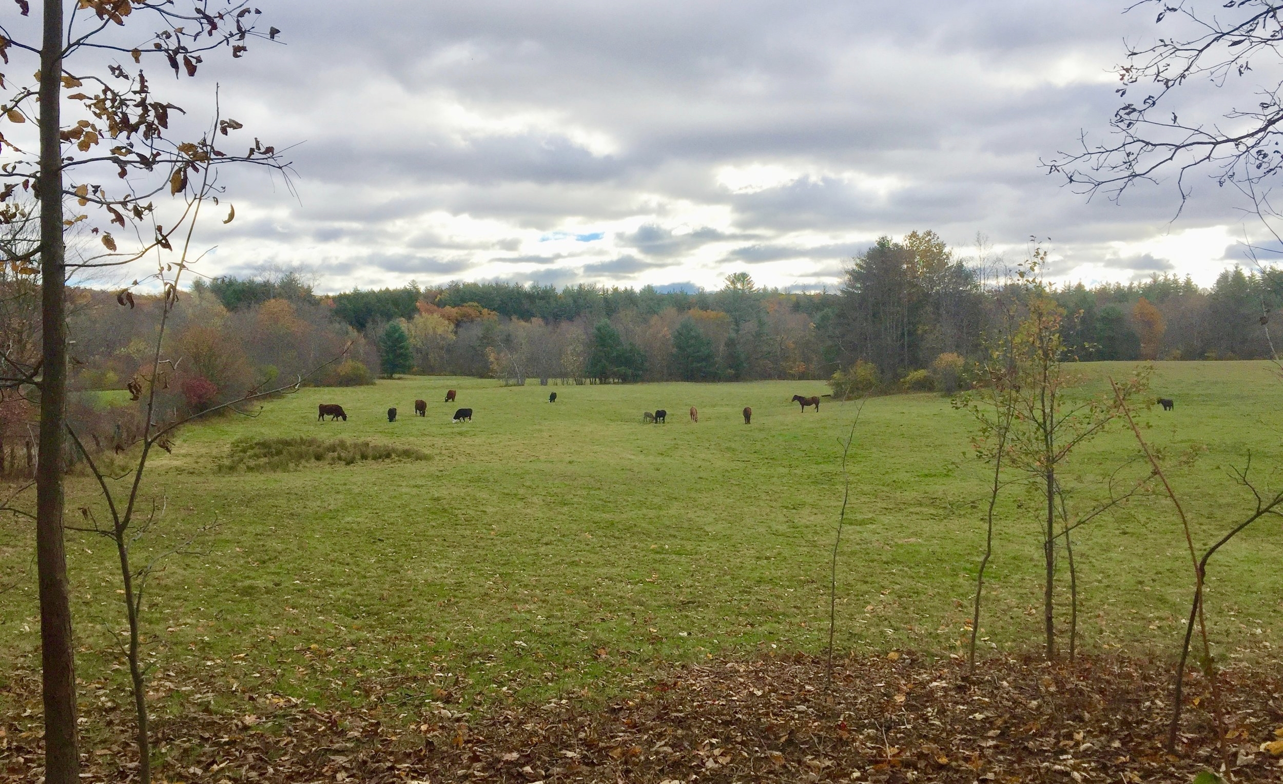 Late summer occupants on the Belding pasture, as seen from Route 32