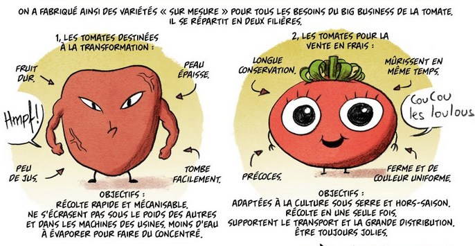 Tomates en hiver.jpg