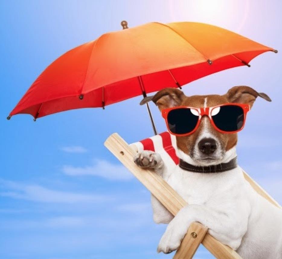 sun protective dog amf.png