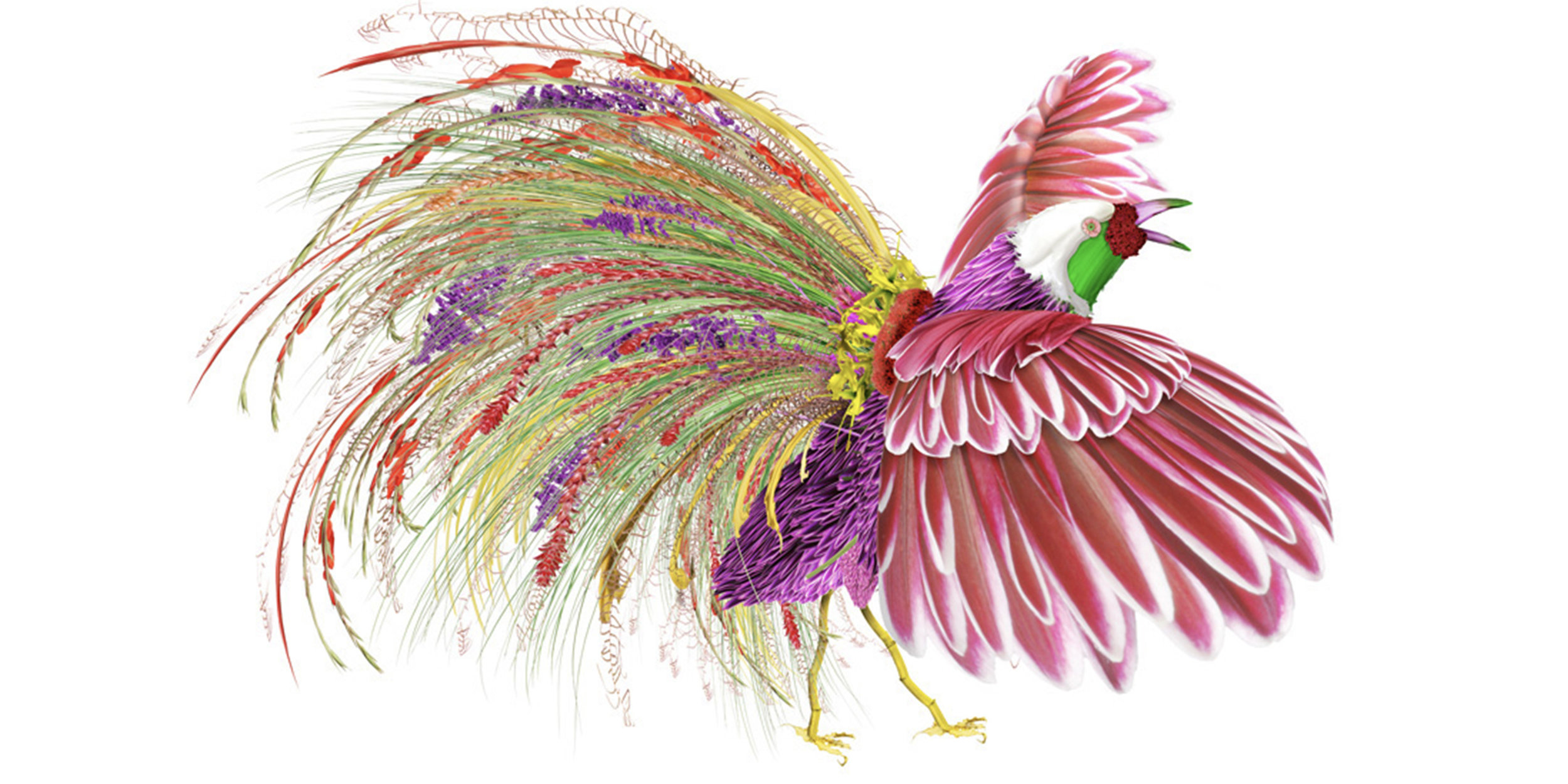 Peacock_Rooster_Sized.jpg