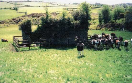Photo 2. By mid-2003, the ruins had been fenced, preventing further destruction from cattle, but still being attacked by vegetation.© 2004 by James Ritzert; used with permission