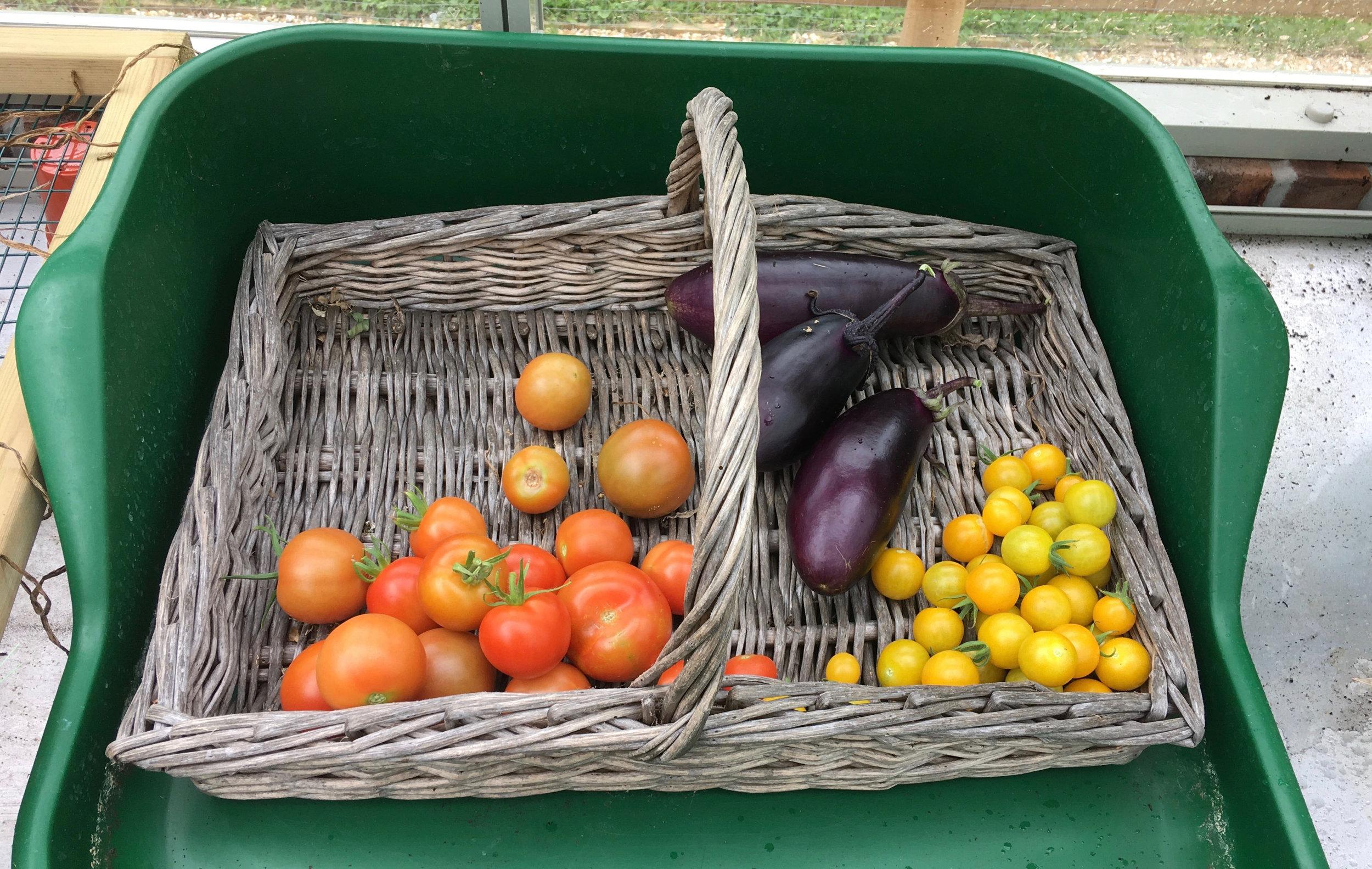 Greenhouse produce.jpg