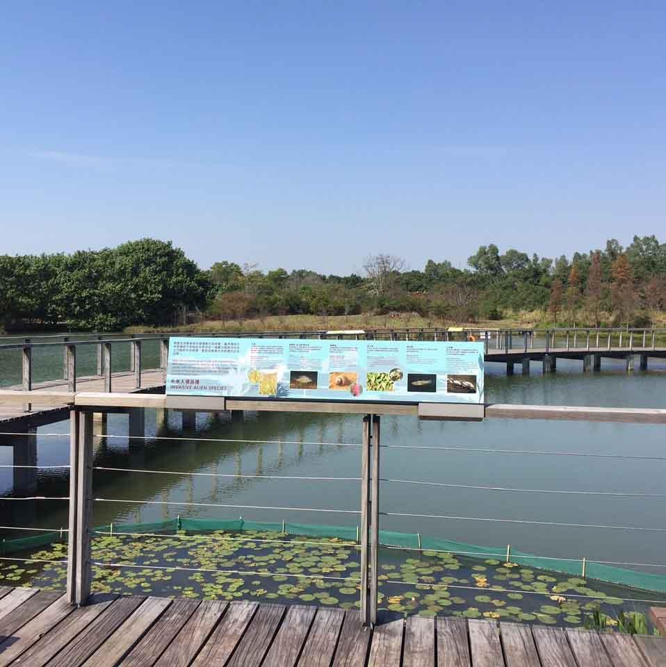 Wetlands Park, HK 1.jpg