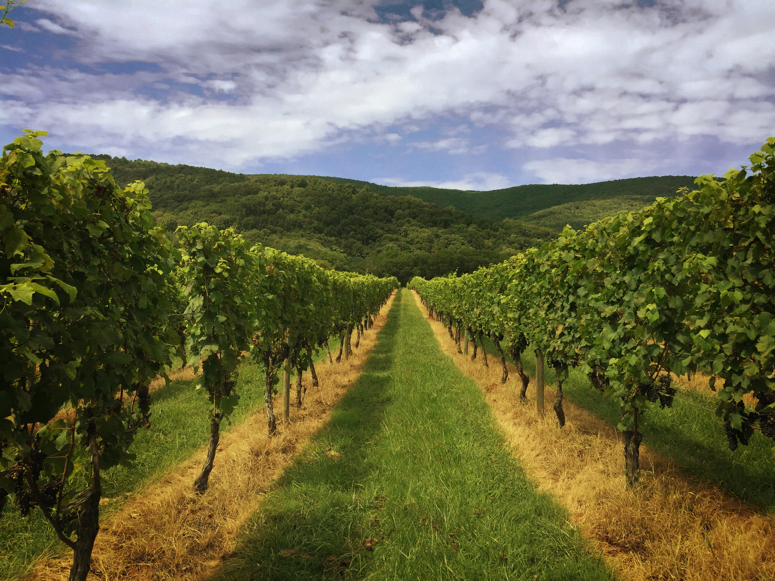 Best Place to Retire , Charlottesville Virginia Wine Tour