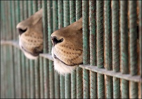 2f4ac3676c0890e1b16e5b7fbc00-should-we-keep-animals-in-zoos.jpg