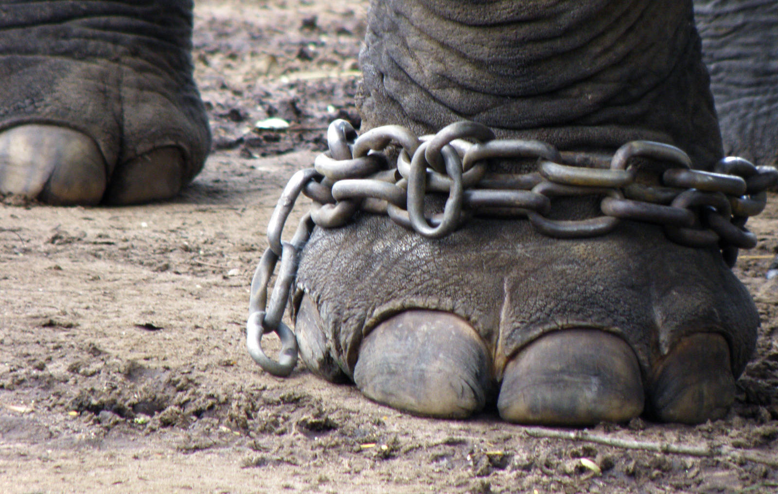5-Reasons-Why-Animal-Circuses-in-the-U.S.-Need-to-be-Banned-NOW.jpg