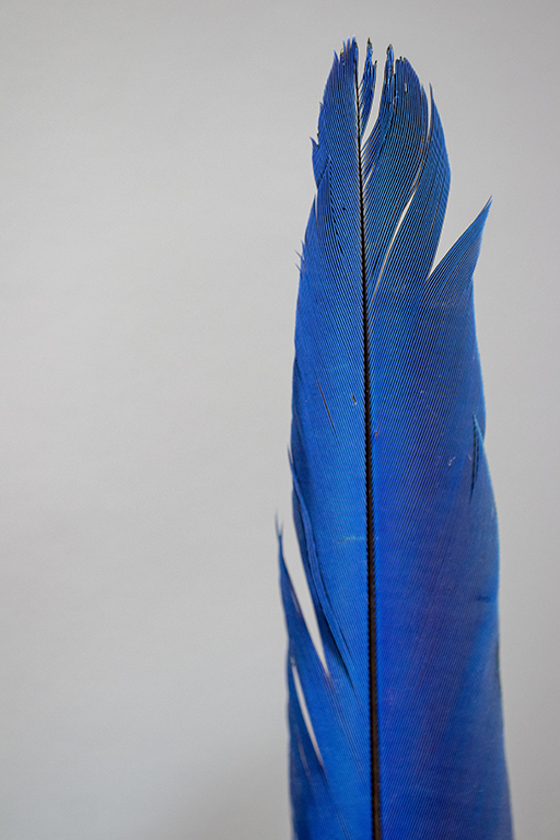 Blue Feather small.jpg