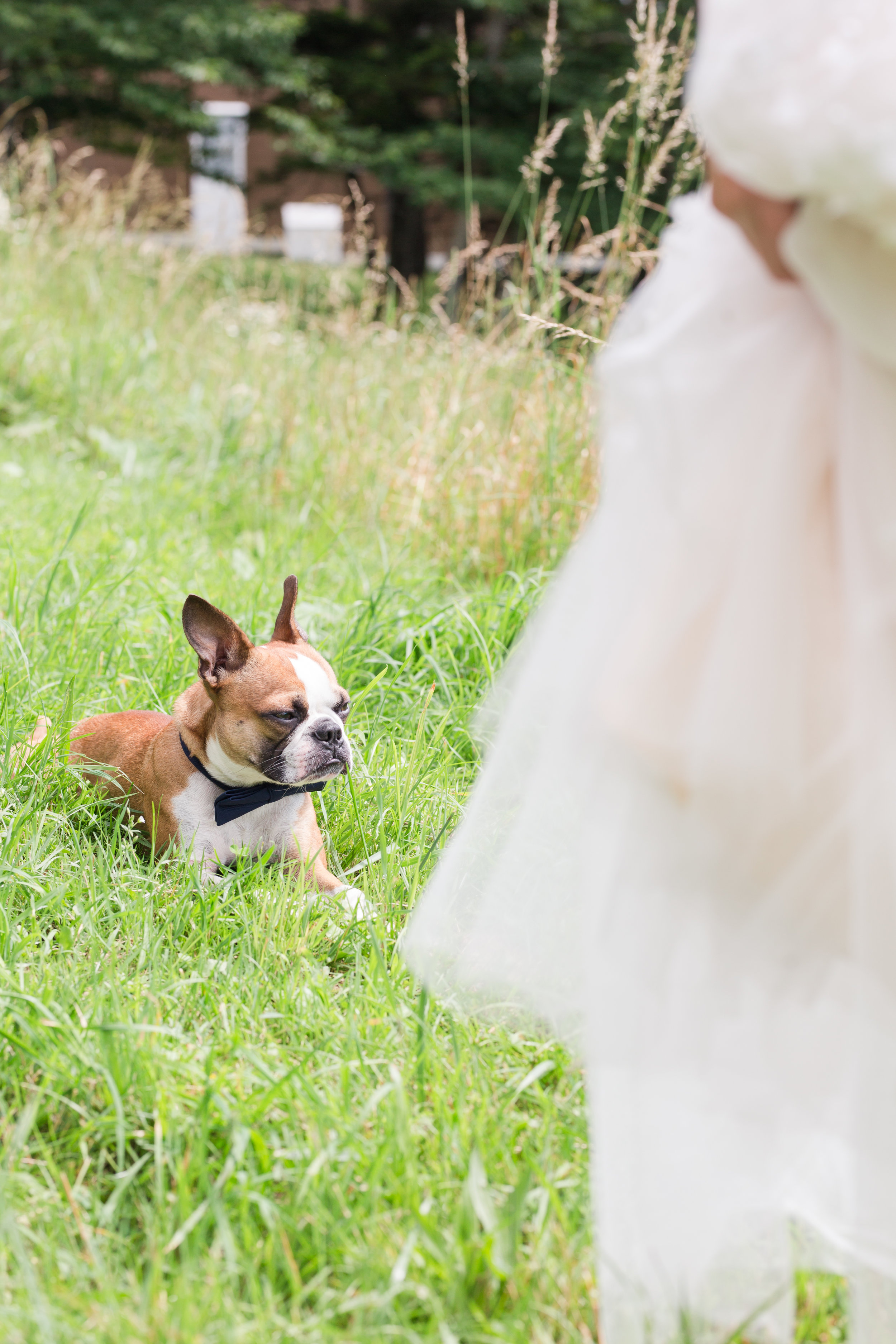 photojournalistic, lifestyle wedding photography in wv