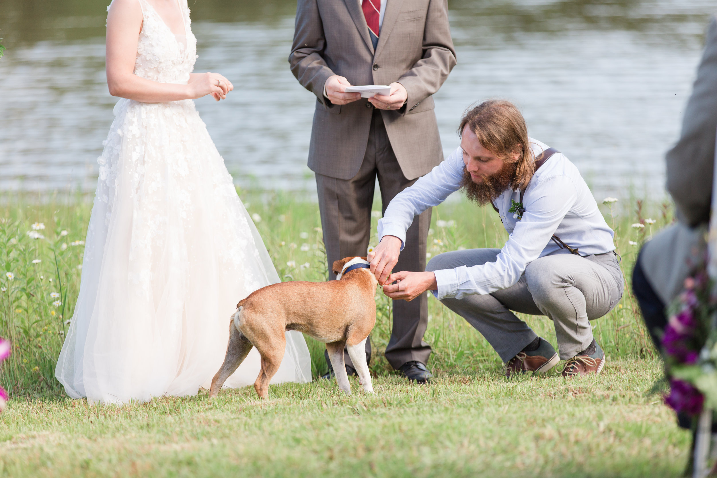 authentic genuine wedding photography in wv - dog ringbearer- lakeside mountain wedding wv