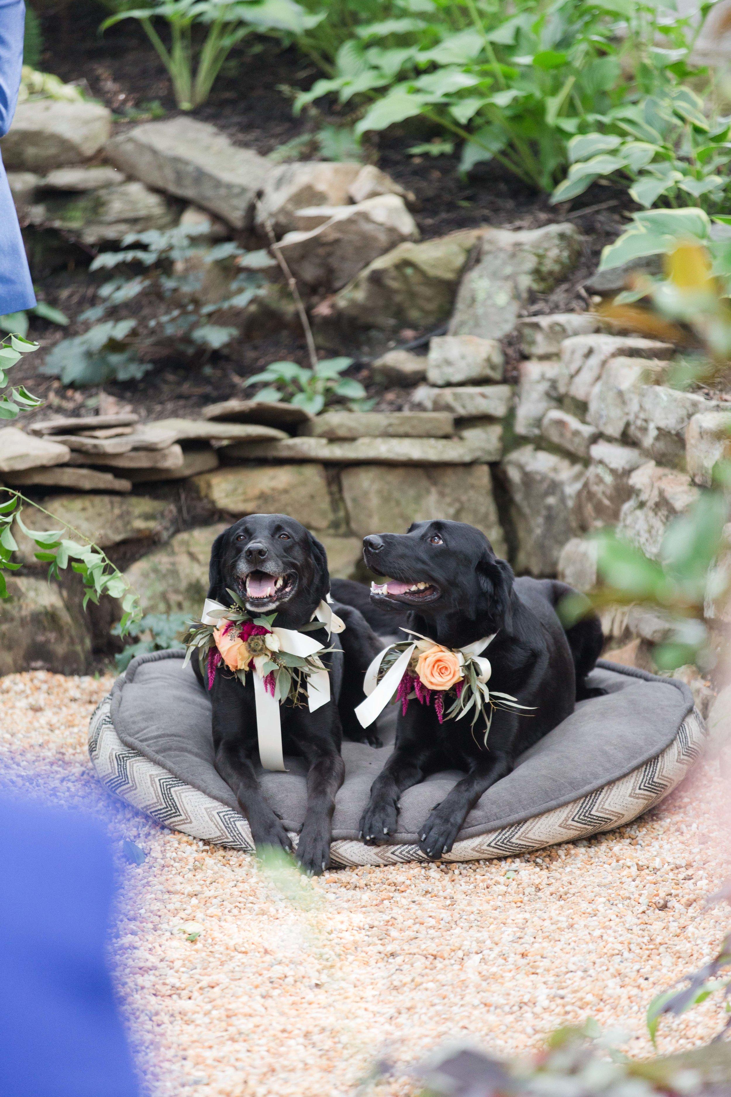 outdoor backyard ceremony wv photographer leesburg va hagerstown md warrenton va-8.jpg