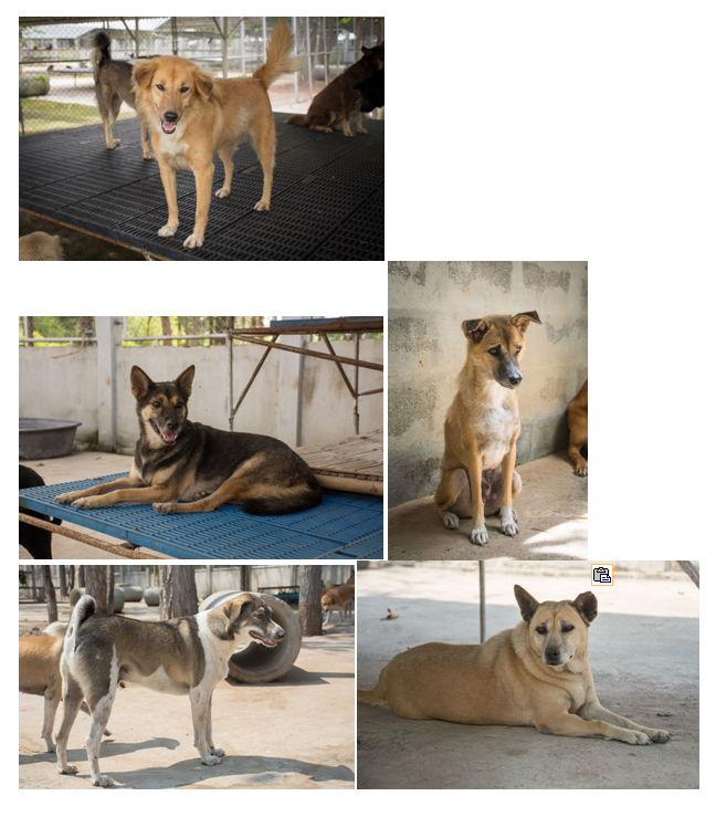 soidogs1.PNG