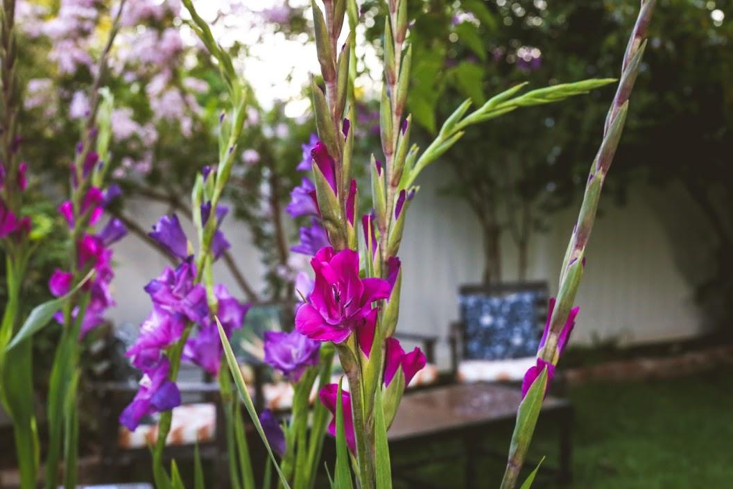 13_Flowers.jpg