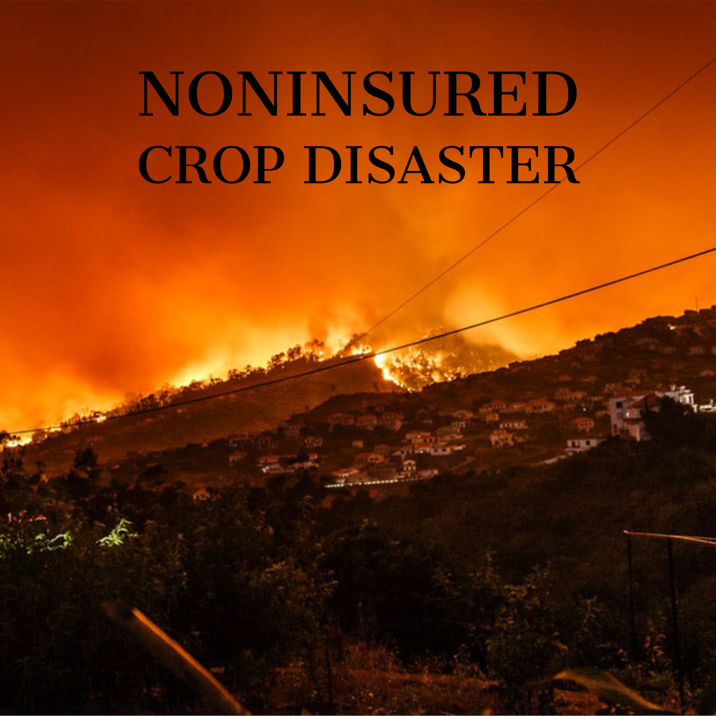 Noninsured Crop Disaster Assistance Program (NAP) - The Noninsured crop disaster assistance program assistance to producers of noninsurable crops to protect against natural disasters that results in lower yields or crops losses, or prevents crop planting. PDF information can be found here.