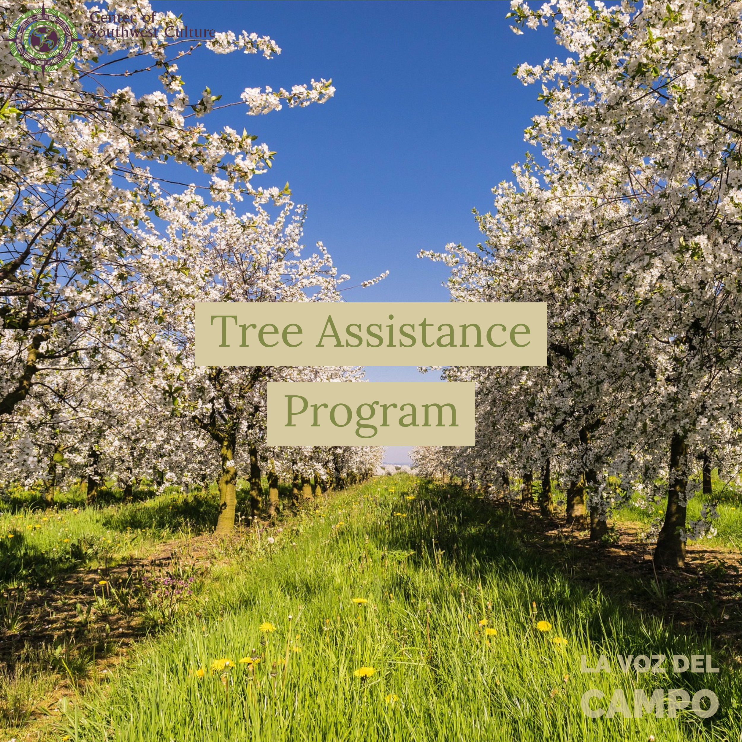 Tree Assistance Program - The tree assistance program provides financial assistance to eligible orchardists and nursery tree growers to replant or rehabilitate eligible trees, bushes, and vines lost by natural disasters. PDF information can be found here.