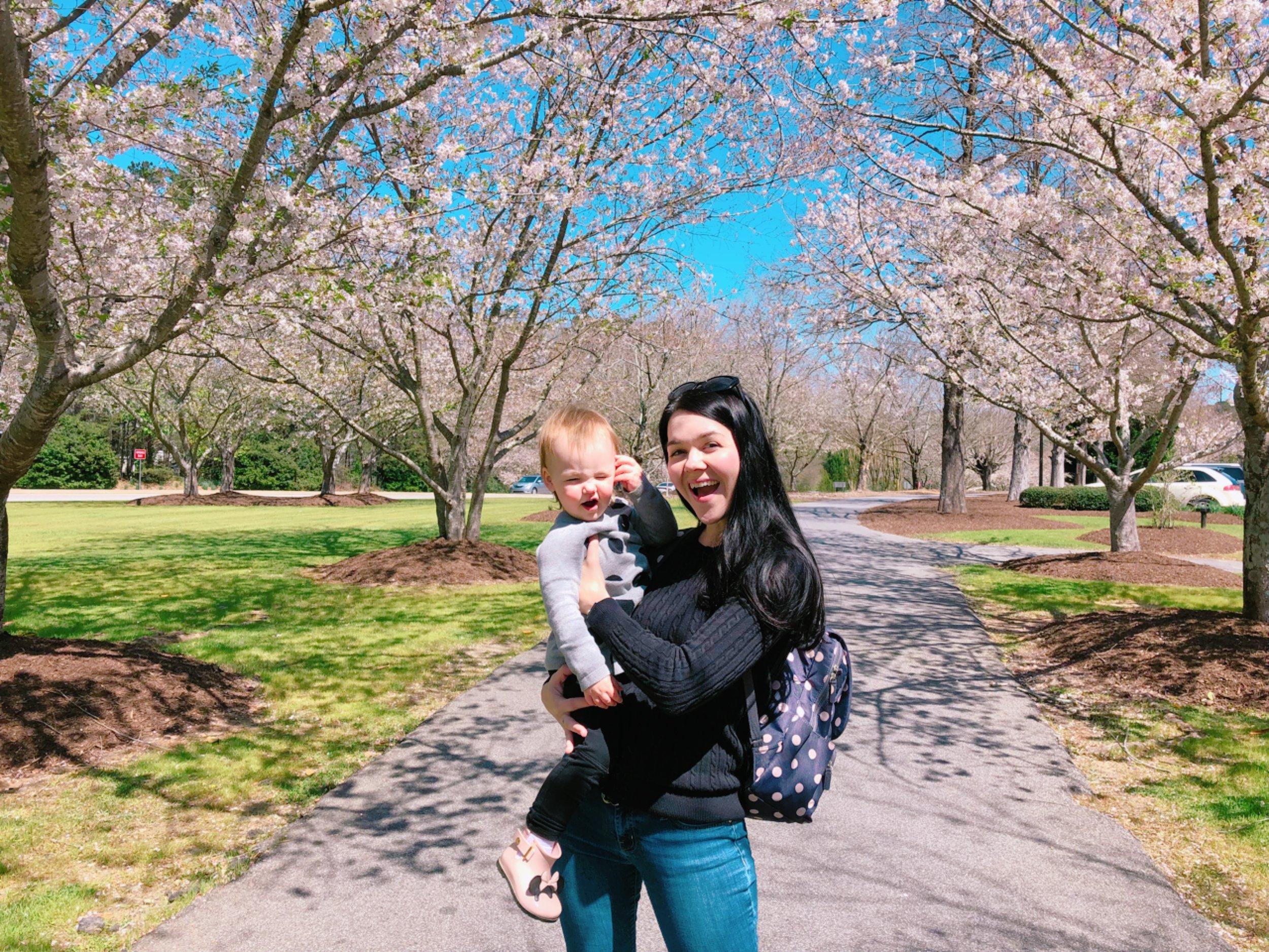 Cherry Blossoms in Atlanta