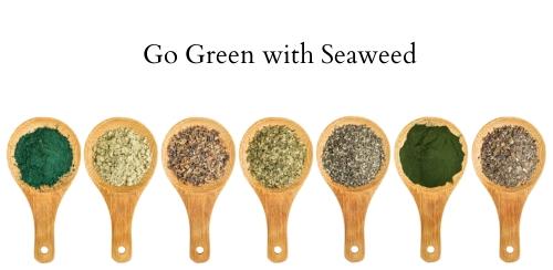 Seaweed.jpeg