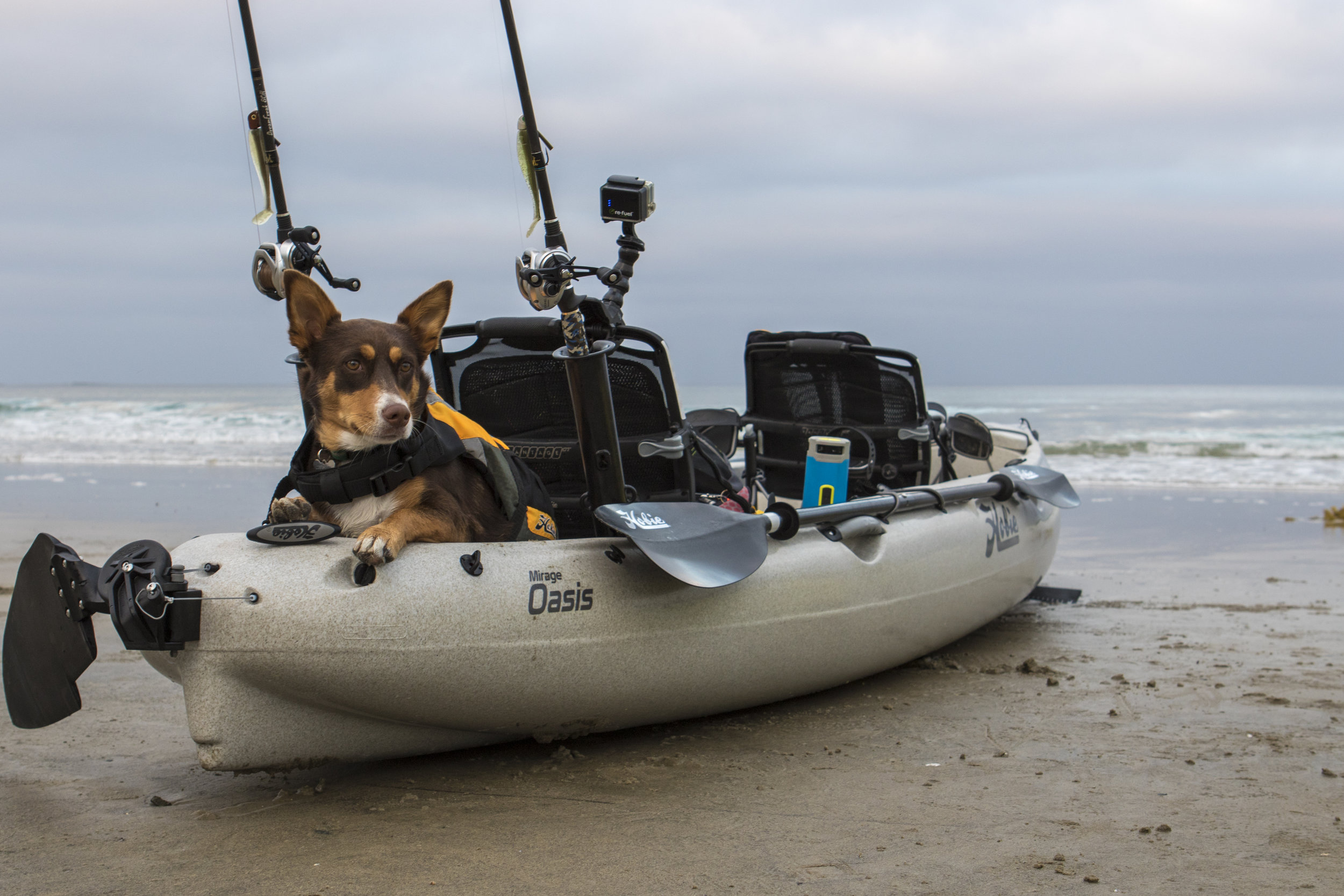 Oasis_action_fishing_beach_dog_roo_Ocean.jpg
