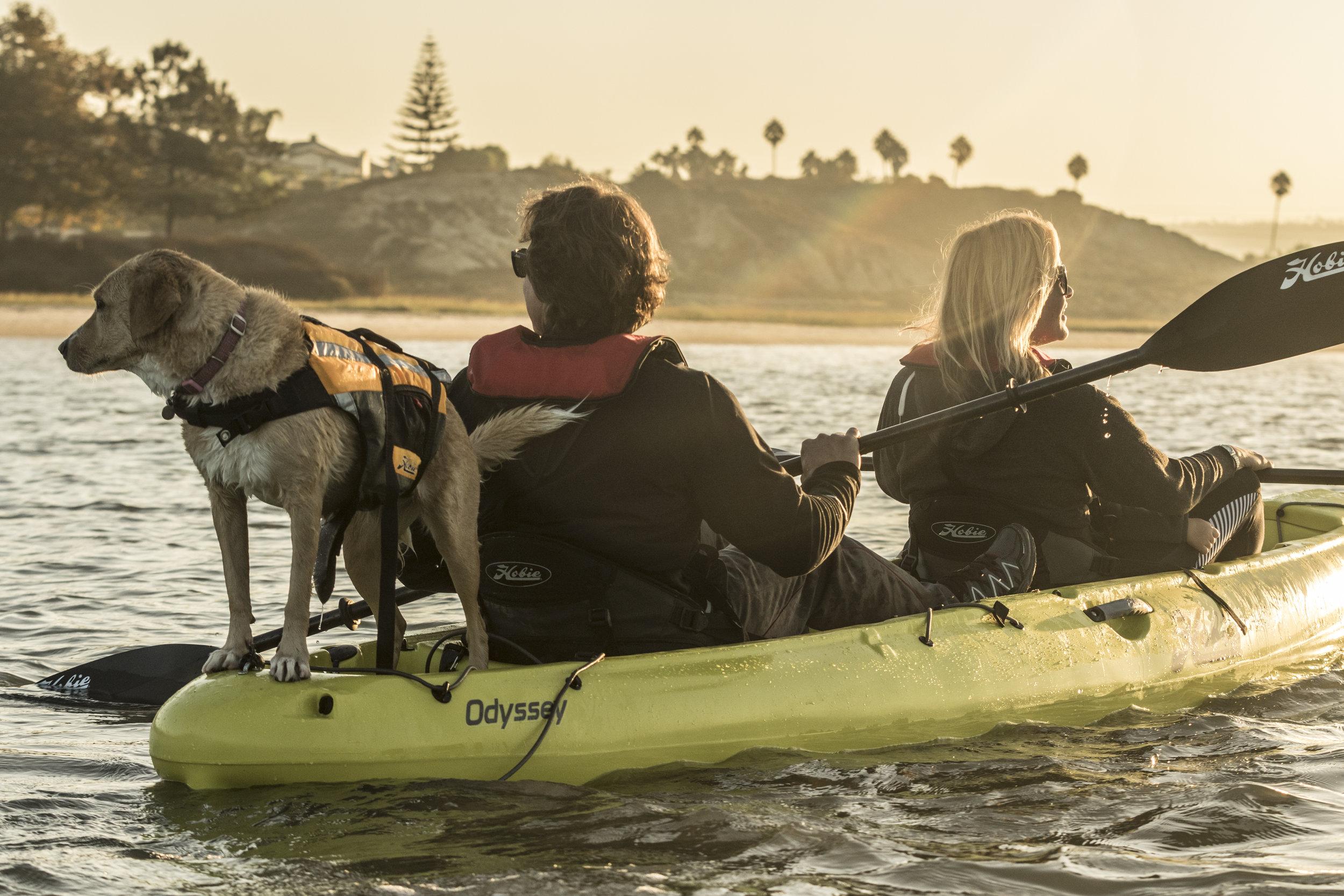 Odyssey_action_seagrass_lagoon_jim_dog_sepia.jpg