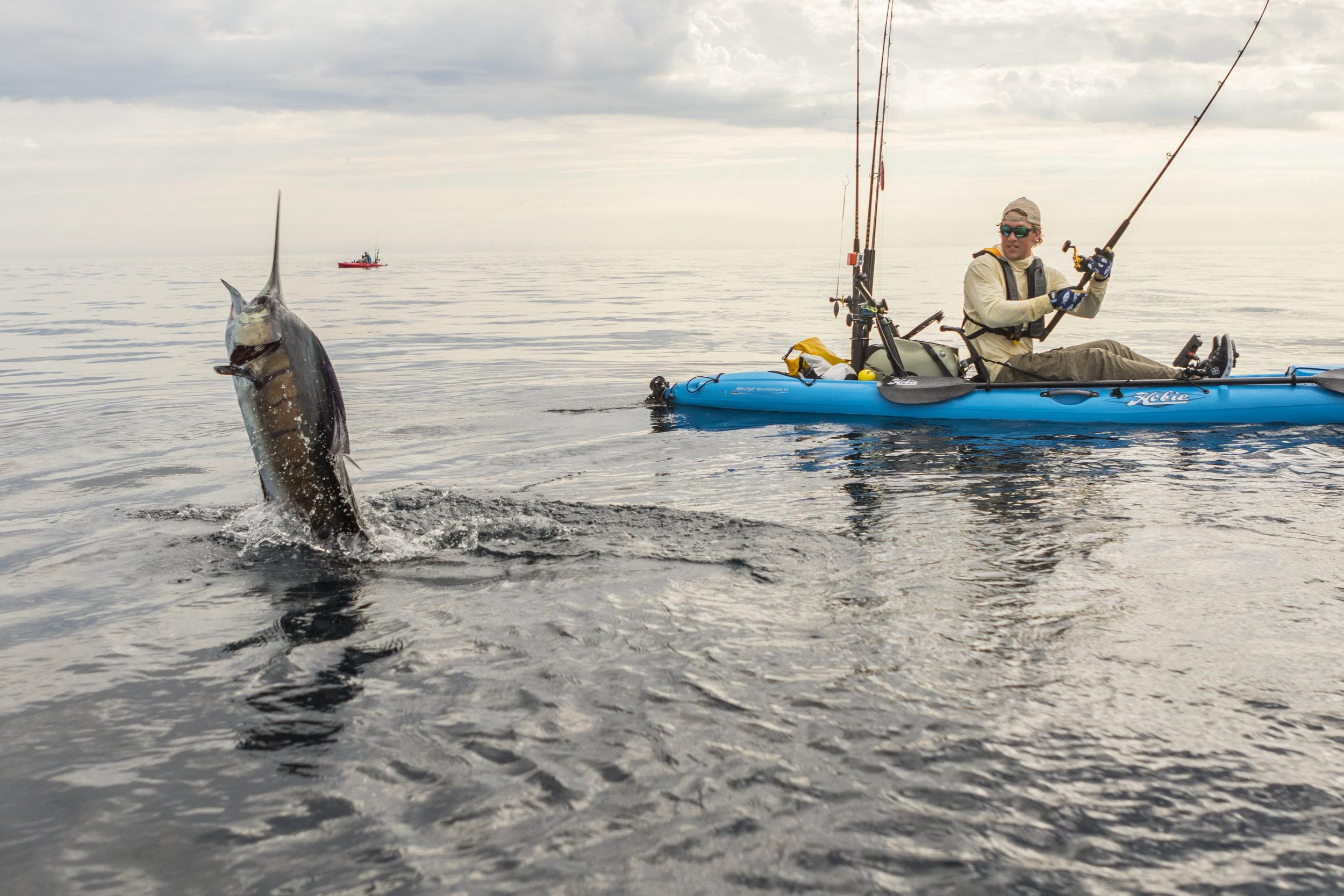Revolution13_action_fishing_sailfish_ocean_blue_jump_8694_full.jpg