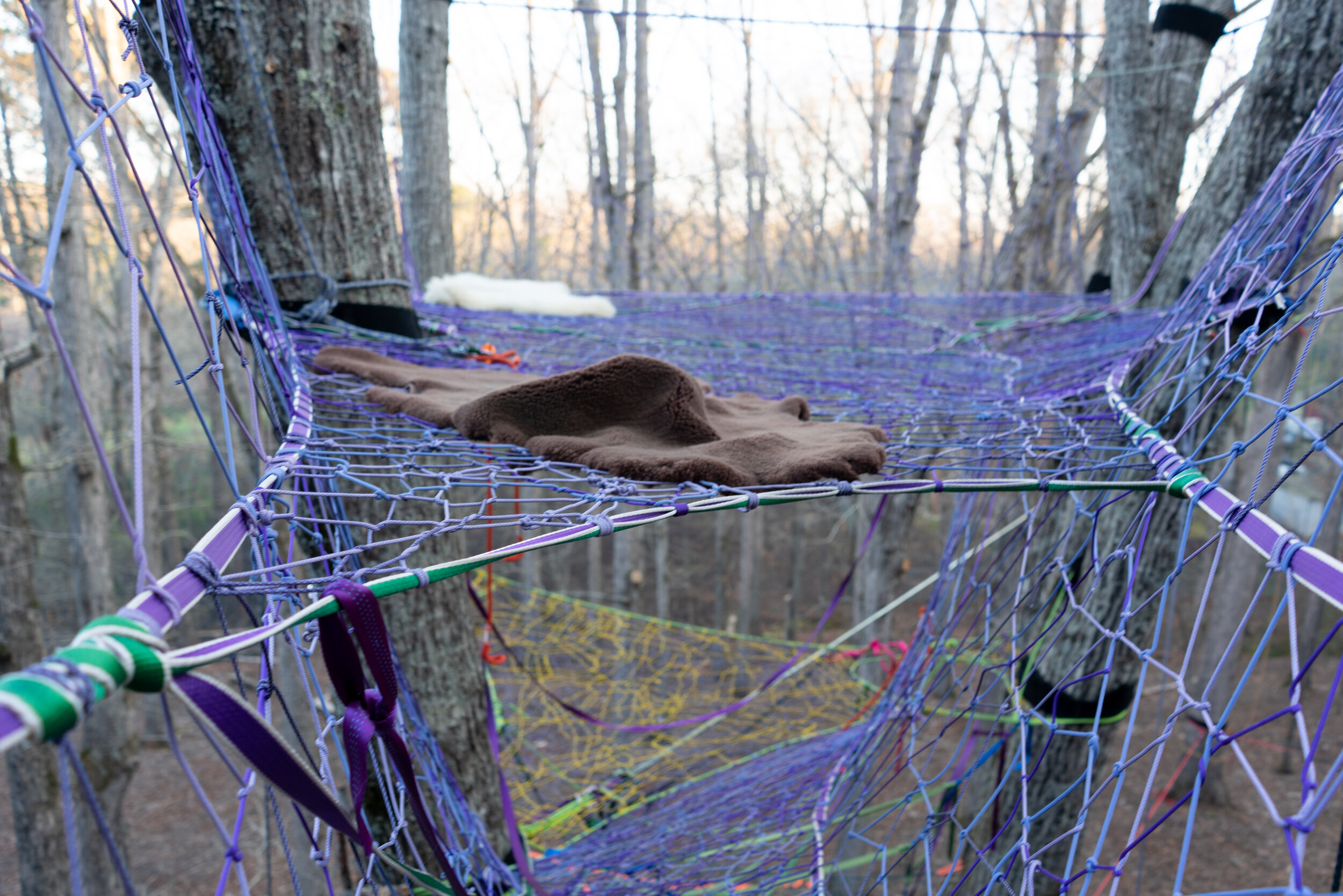 Purple is Elegant - Regarded world wide for its precious beauty, purple is our favorite color for tree nets.