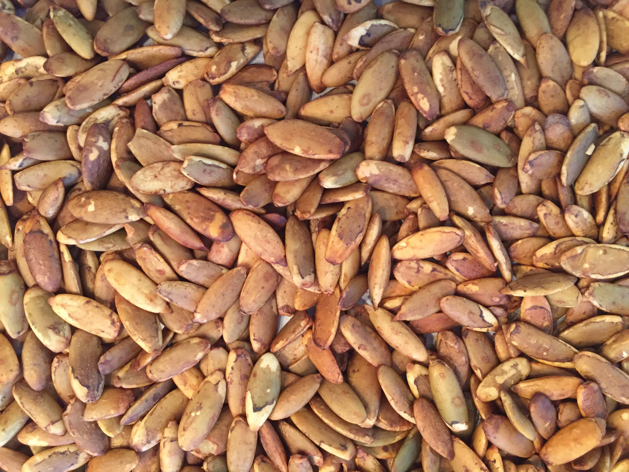 Copy-of-Tamari-Roasted-Pumpkin-Seeds_Close-up_KSRice_rotated.jpg