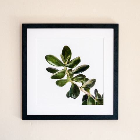 One of Gareth's amazing works, a drawing of a Jade plant. Available  here .