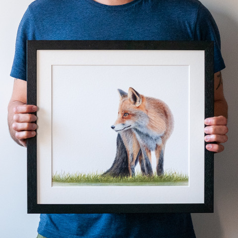 Gareth's beautiful fox. Prints are available in his Etsy shop  here .