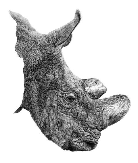 The detail on this Sudan rhino is stunning. Available in his shop  here .