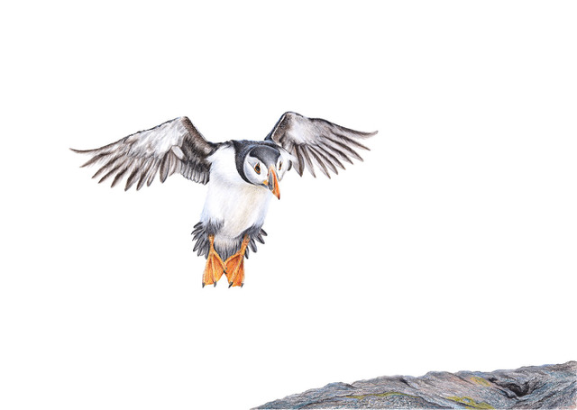 Who doesn't like a Puffin! Also available in his shop  here !