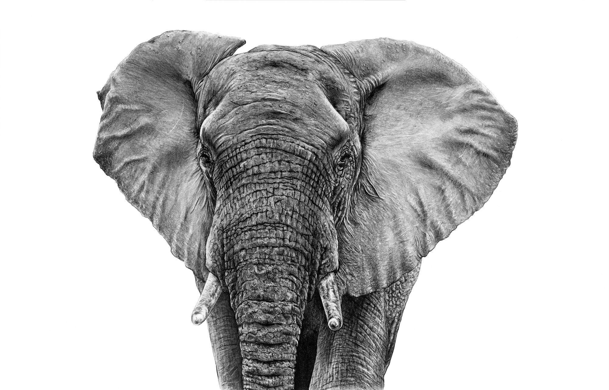 Gareth's beautiful elephant which he made with just pencil, is  available in A2 and A3 size!