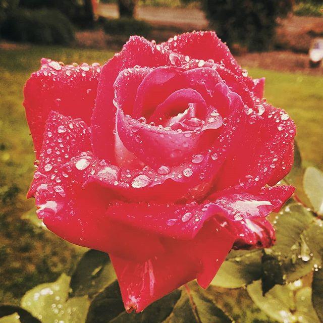 So rosey