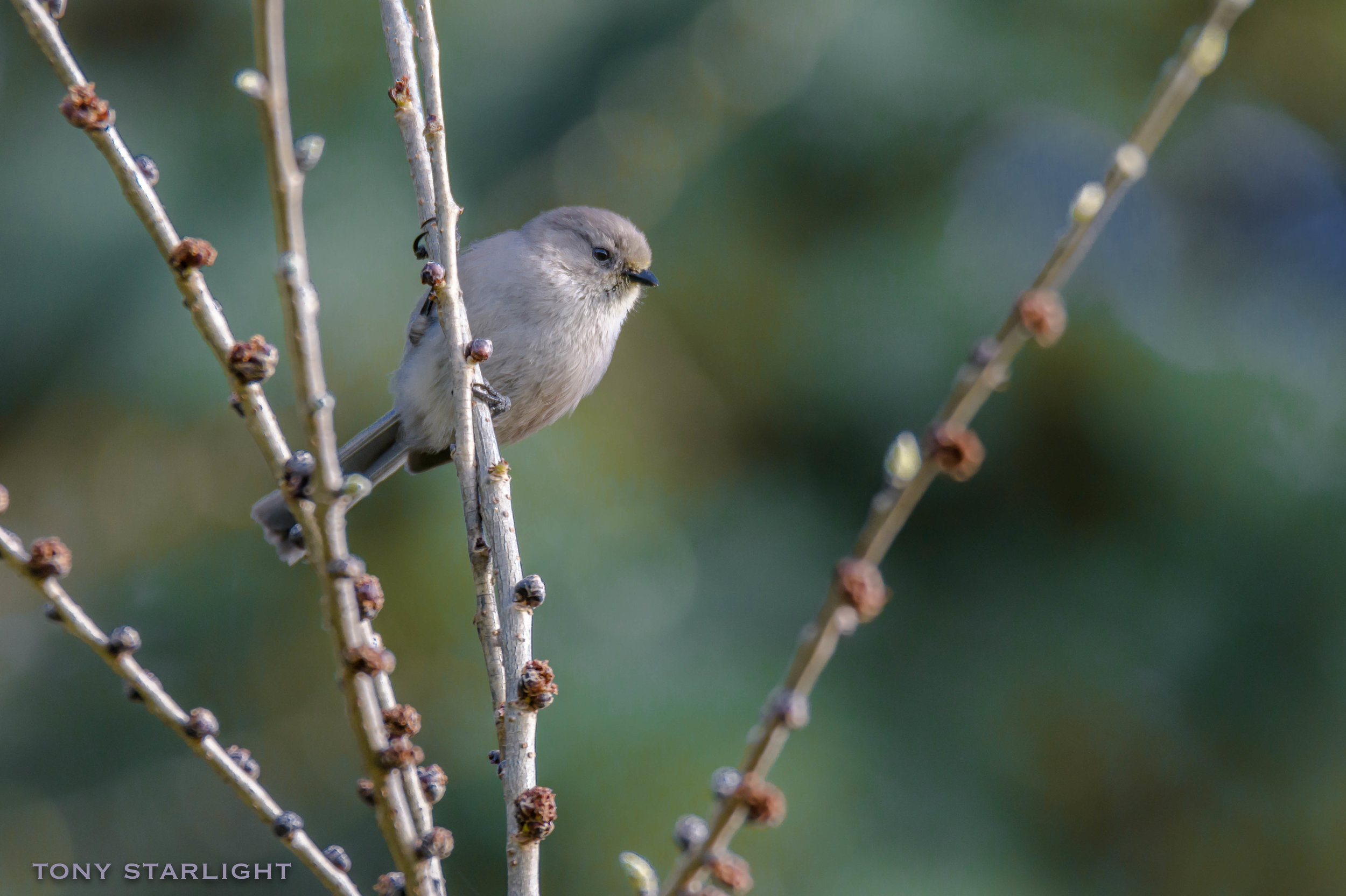 Bushtit - When I was 16, my classmates and I would have giggled every time someone said