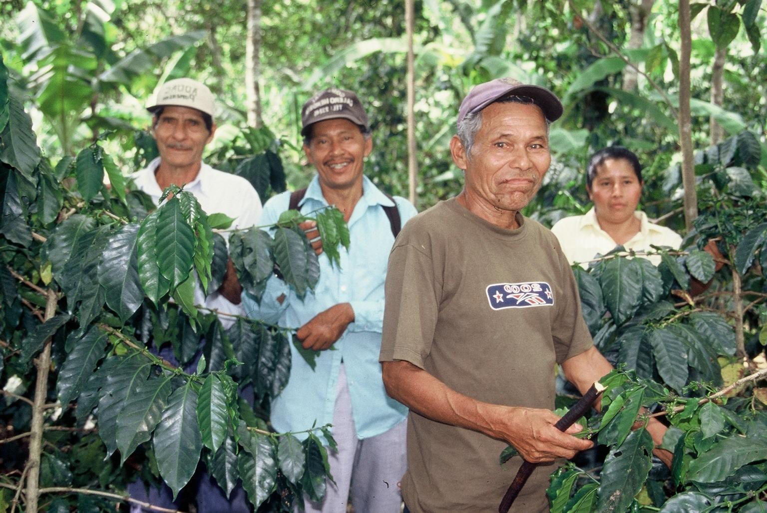 Comercio justo, Orgánico, retorno del 100%   Café: Nuestra razón de ser    Más información