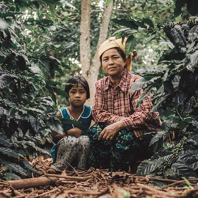 We were cupping micro lots from the past harvest and came across a winner.  Out of our 750 farmers, we went to track down this new village and farmer who sold the coffee and this is what we found – a beautiful mother and daughter. Their coffee seems to love the cool shade, organic mulch and high altitude and we LOVE the coffee. - - - -  #behindtheleafcoffee #specialtycoffee #PaO #singleorigincoffee #coffeeorigin #myanmar #shanstate #coffeefarmer #traceability #coffeeharvest #shadegrowncoffee #mulch #backyardcoffee #waitingforharvest 📷 @forasiacheers
