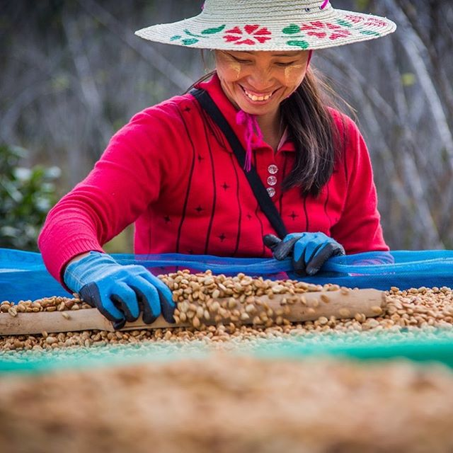 "Seriously tastes like peach cobbler.  Our pulped natural / honey coffee placed 1st this year in Myanmar's Coffee Competition in the ""others category"". It scored 87.75.  It's quite risky in the fermentation and labor intensive in the drying but worth it in the end. - 📷 @ataliebalephotography"