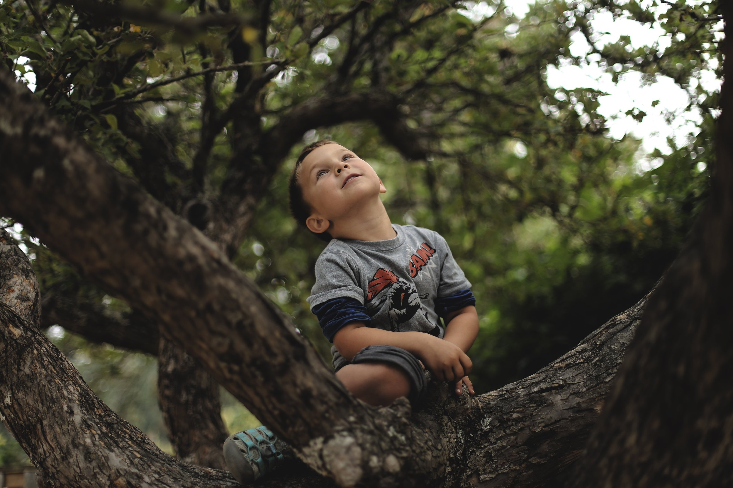 boy looking up a tree.jpg