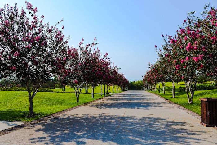 Entrada al Abanico de Flores