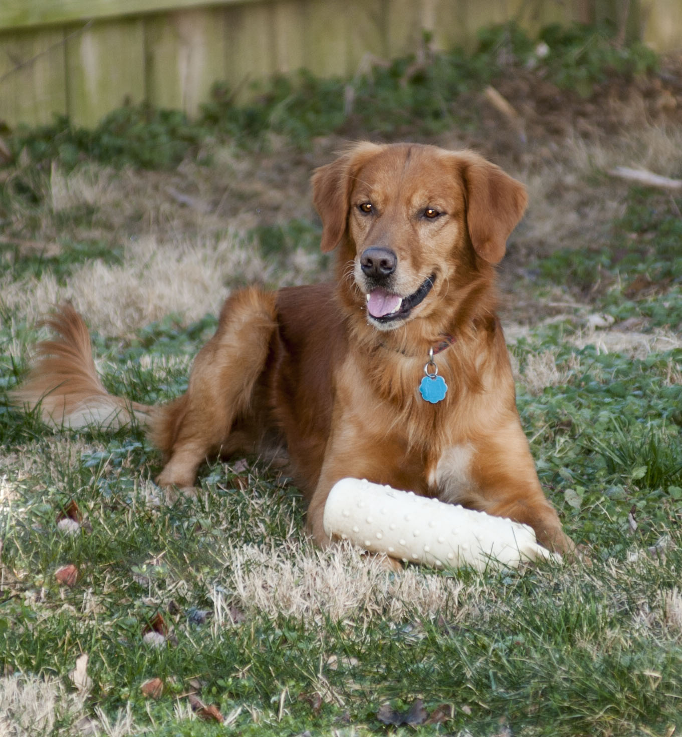 lexington private obedience dog training